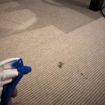 VARNISH CARPET STAIN REMOVAL
